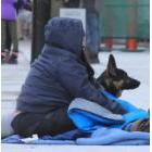 Homeless person and dog on a sidewalk