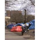Tents pitched in Oppenheimer Park